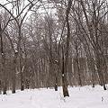 森のさんぽ  DSC02443