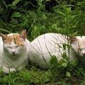 Photos: ねむり猫