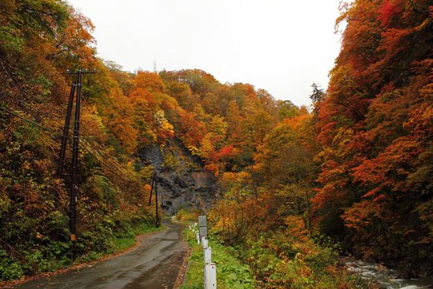Photos: 葛根田渓谷~滝ノ上温泉付近の紅葉・1