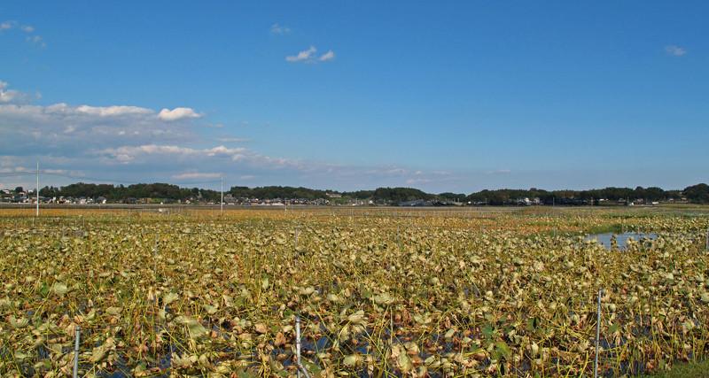 20100919霞ヶ浦010