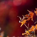 Photos: 穏やかな光と紅葉-F