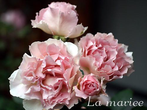 ラ マリエ