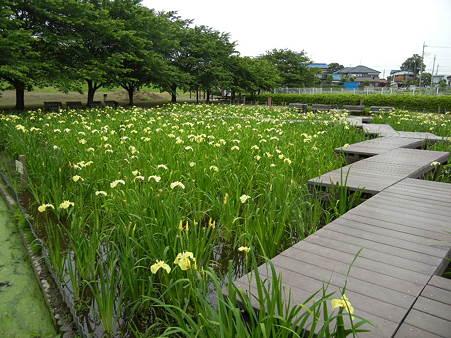 千貫樋水郷公園 (9)