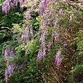 Photos: Flower_CONTAX159MM_Velvia100_05212011-02