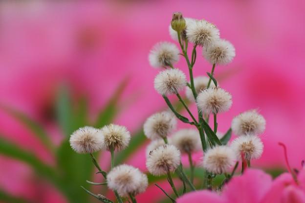 写真: 美し雑草
