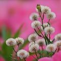 Photos: 美し雑草