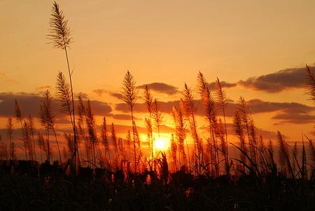 砂糖きび畑