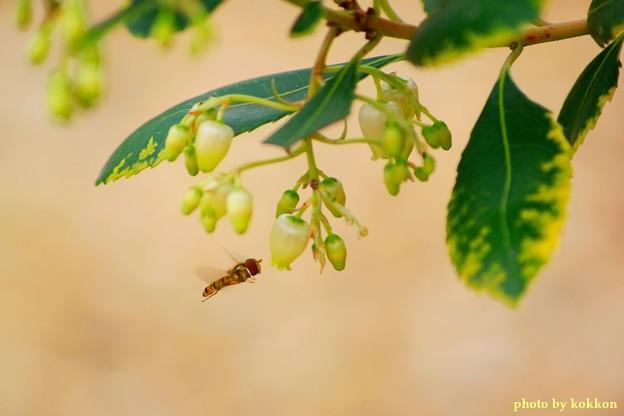 ストロベリーツリー