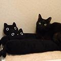 写真: 黒い三連星