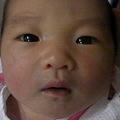 写真: 生後3日。毎日顔つきが変わ...