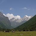 海抜3700mの牧場