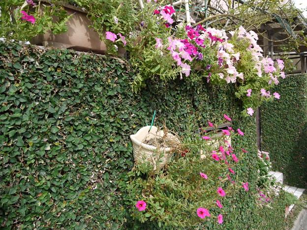 夏の塀の花