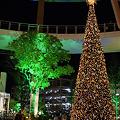 Photos: 今年のツリー