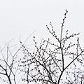 Photos: 春待ち