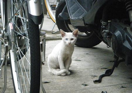 駐輪場の白猫ちゃん