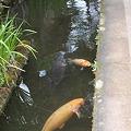 Photos: 津和野界隈16