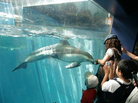 イルカとあそぼ1713