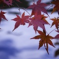 Photos: 2010京都植物園秋02