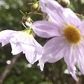 Photos: 2010京都植物園秋06