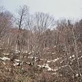 Photos: 残雪