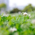 写真: 20100509_142036