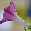 Photos: 20110809_070558