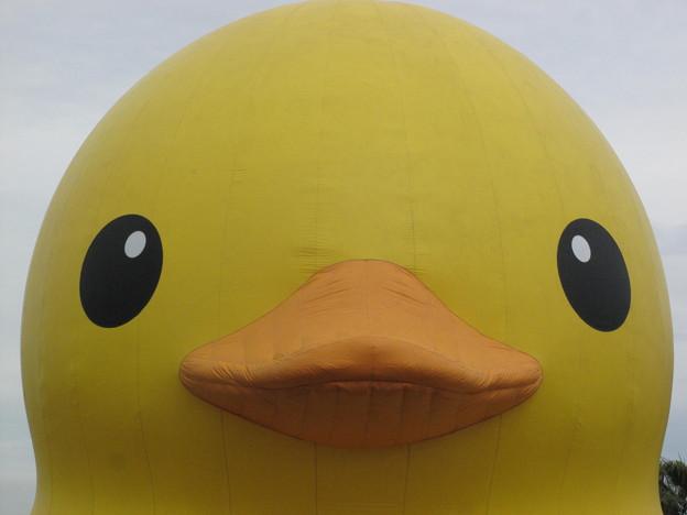 Rubber Duckラバーダック