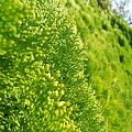 秋の中の鮮やかな緑