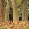 Photos: 秋の風景
