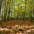 The Quiet Woods