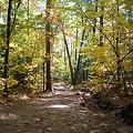 Fall Foliage and the Light