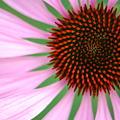 Photos: Fermat's spiral