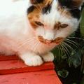 写真: 猫さんに会った(*^_^*)