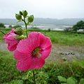 Photos: お花モードで撮影