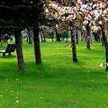 緑豊な公園