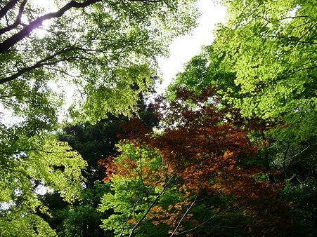 100615-明月院裏庭園-51