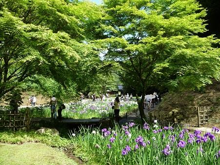 100615-明月院裏庭園-53