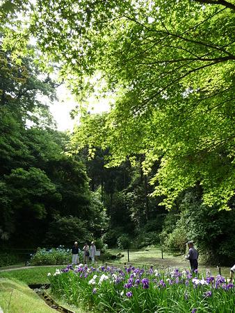 100615-明月院裏庭園-59