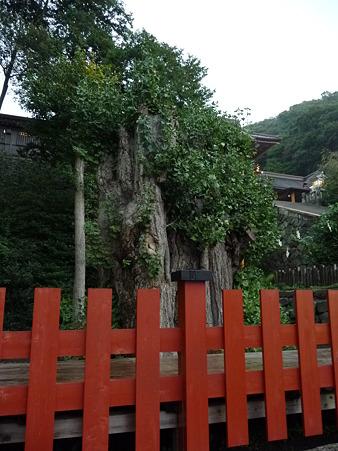 101026-八幡さま (5)