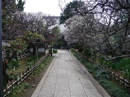 110225-宝戒寺  (2)