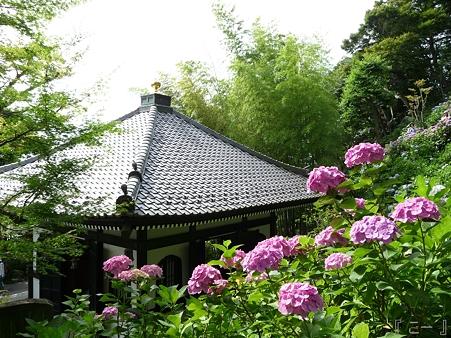 110624-長谷寺 あじさい (5)