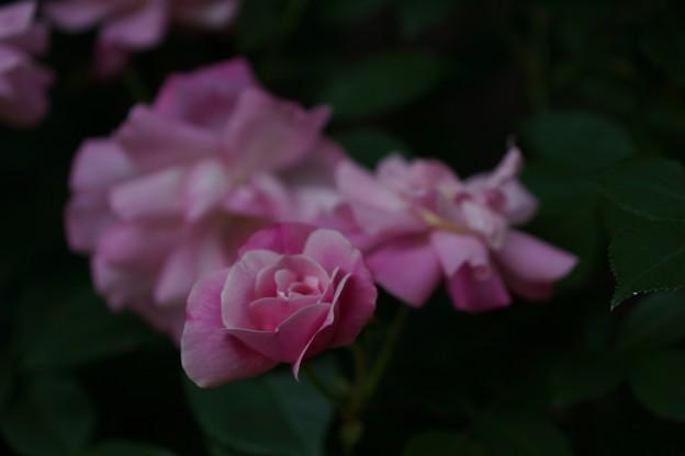 しょうばら花会議 (12)