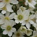 写真: 201104flower 810