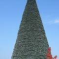 ピエリのツリー