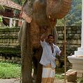 Photos: 象と象使い