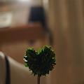 写真: ハート型の木