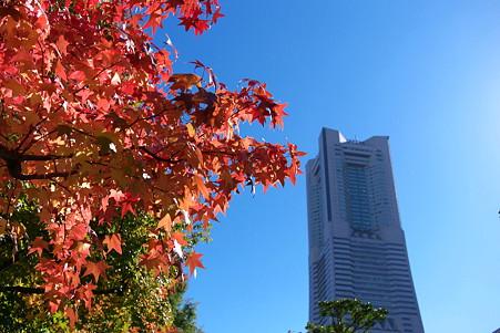 2010.11.10 みなとみらい 紅葉