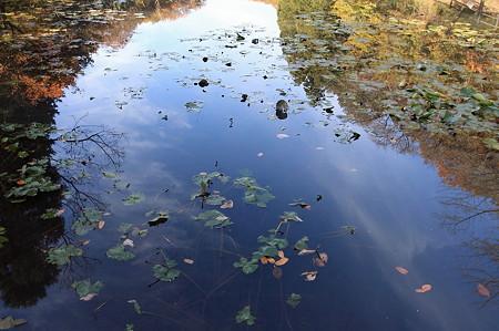 2010.12.01 大池公園 蓮池に空