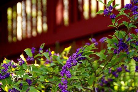 紫の彩・・1