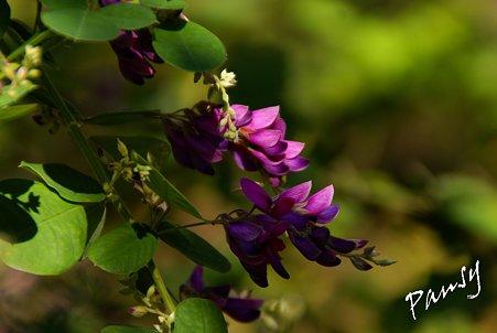紫の彩・・3